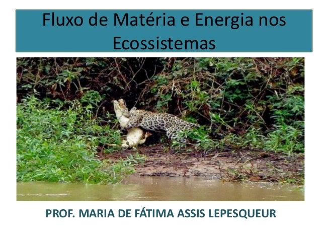 Fluxo de Matéria e Energia nos Ecossistemas PROF. MARIA DE FÁTIMA ASSIS LEPESQUEUR