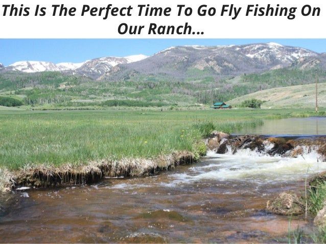 Fly fishing guide service in colorado for Colorado fishing guide
