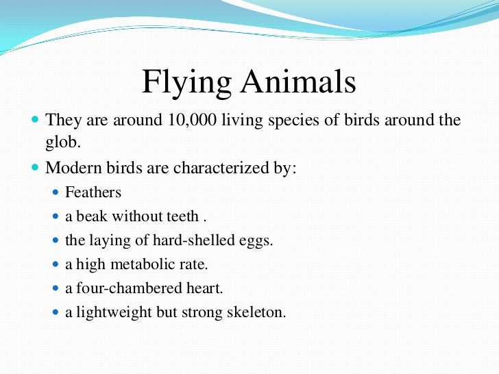 Flying Animals They are around 10,000 living species of birds around the  glob. Modern birds are characterized by:   Fe...