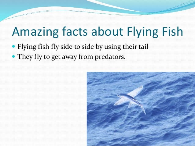 Fish facts page 18 forums at psych central for Facts about fishing