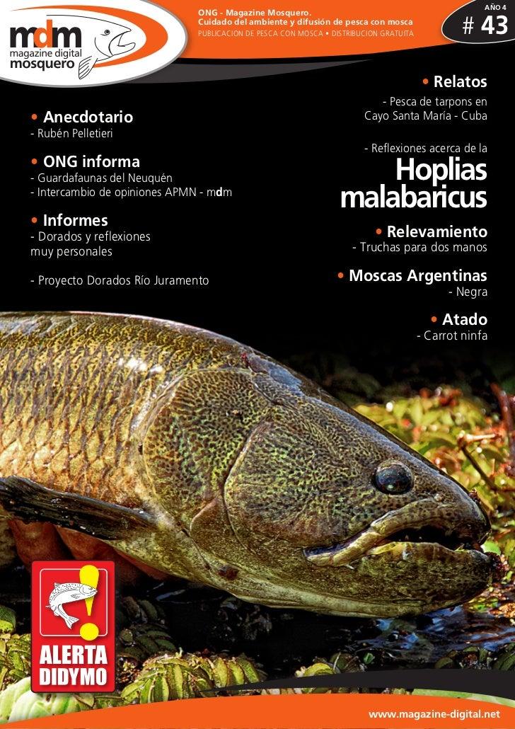 AÑO 4                              ONG - Magazine Mosquero.                              Cuidado del ambiente y difusión d...