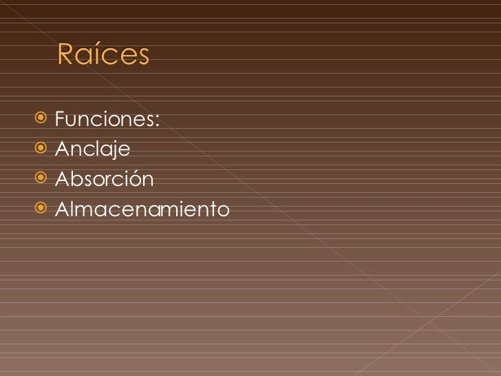 Raíces (anatomía general) Slide 2