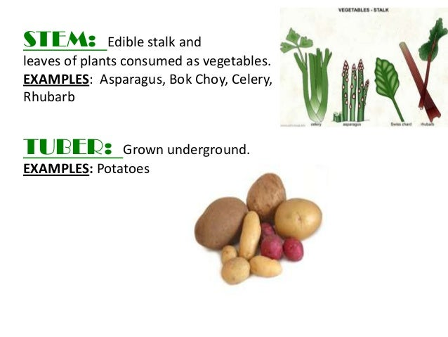 Pea seed vegetables png watercolor set.