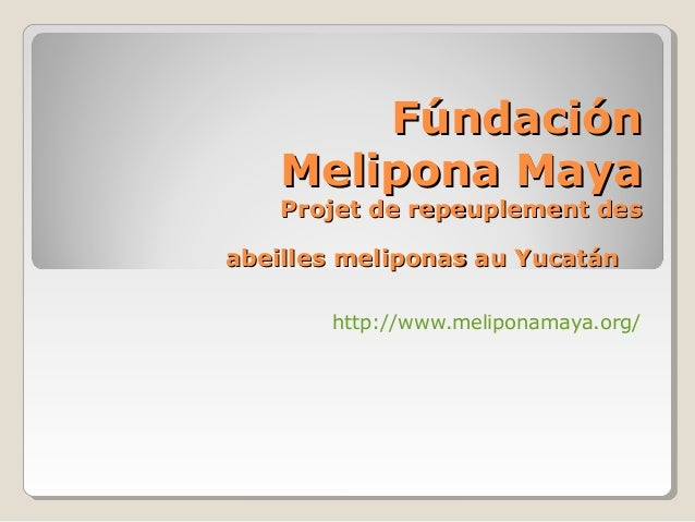 FúndaciónFúndación Melipona MayaMelipona Maya Projet de repeuplement desProjet de repeuplement des abeilles meliponas au Y...