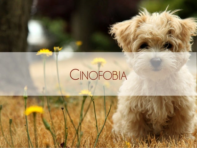CINOFOBIA