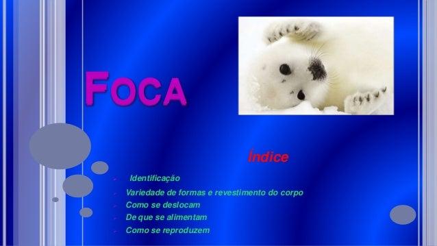 FOCA Índice  Identificação  Variedade de formas e revestimento do corpo  Como se deslocam  De que se alimentam  Como ...