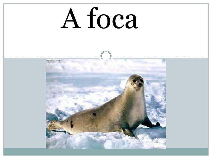A foca