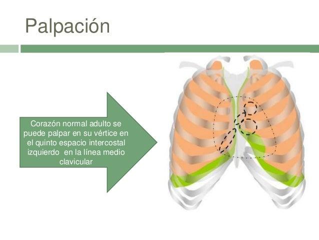 Palpación Corazón normal adulto se puede palpar en su vértice en el quinto espacio intercostal izquierdo en la línea medio...