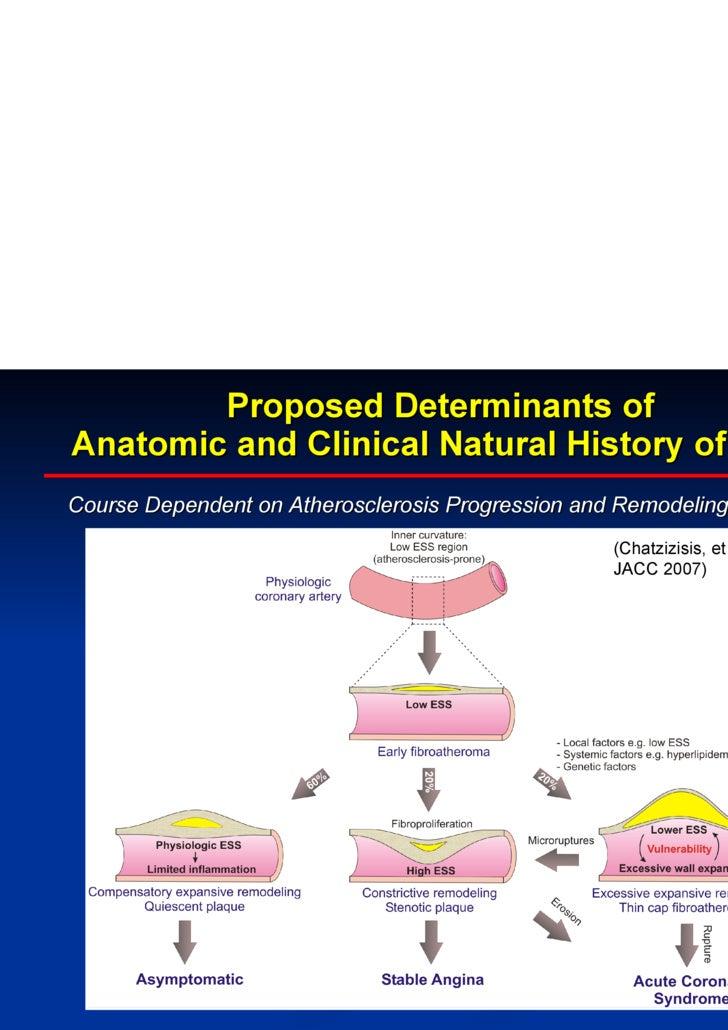 Natural History Of Atherosclerosis