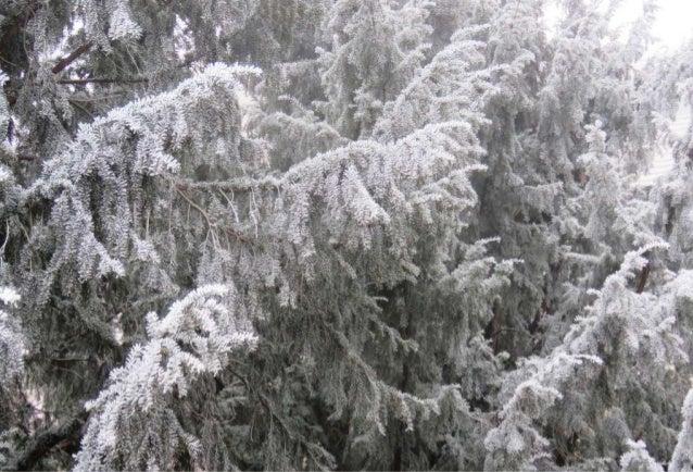 Fog freeze, (Timisoara, Romania)