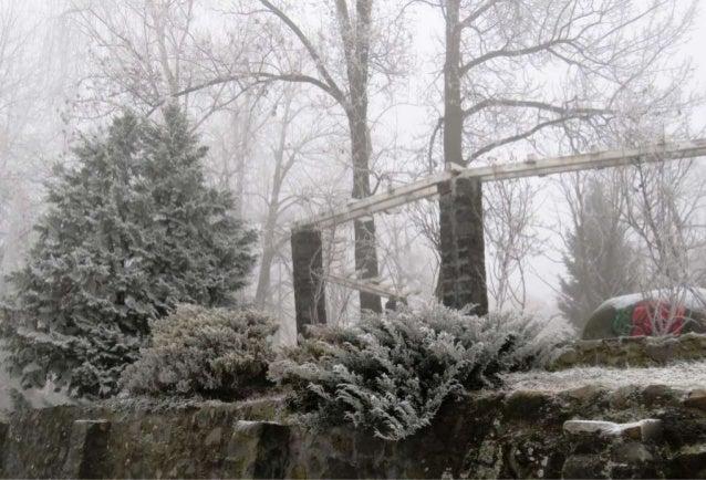 Fog freeze, (Timisoara, Romania) Slide 3