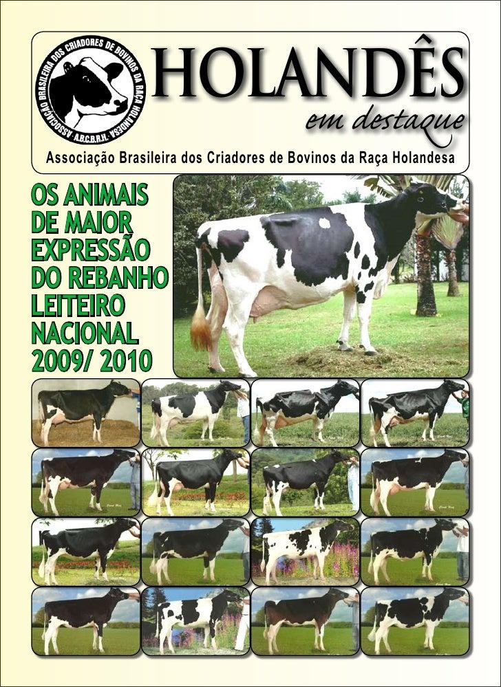 HOLANDÊS                                          em destaque  Associação Brasileira dos Criadores de Bovinos da Raça Hola...