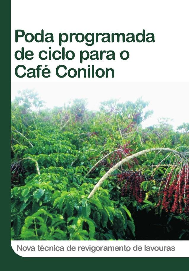 Nova técnica de revigoramento de lavouras Poda programada de ciclo para o Café Conilon