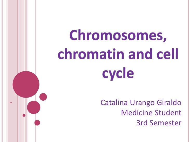 Chromosomes, chromatin and cellcycle<br />Catalina Urango Giraldo<br />Medicine Student<br />3rd Semester<br />