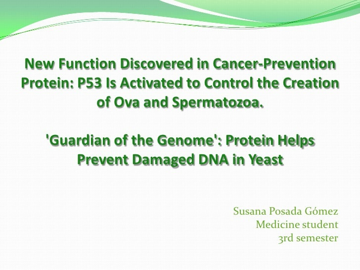 New Function Discovered in Cancer-Prevention Protein: P53 Is Activated to Control the Creation of Ova and Spermatozoa.'Gu...