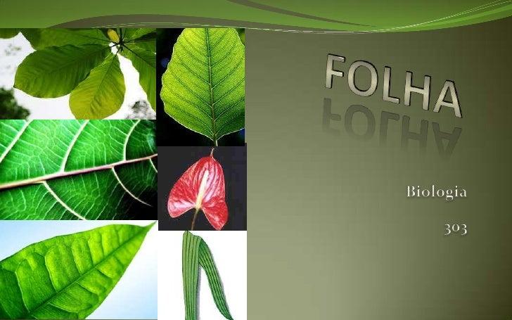 Partes da folha    Limbo: o limbo é a região  mais larga da folha. Nele  encontram-se os estômatos e as  nervuras, que po...