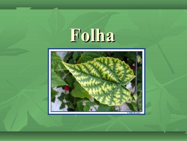 FolhaFolha