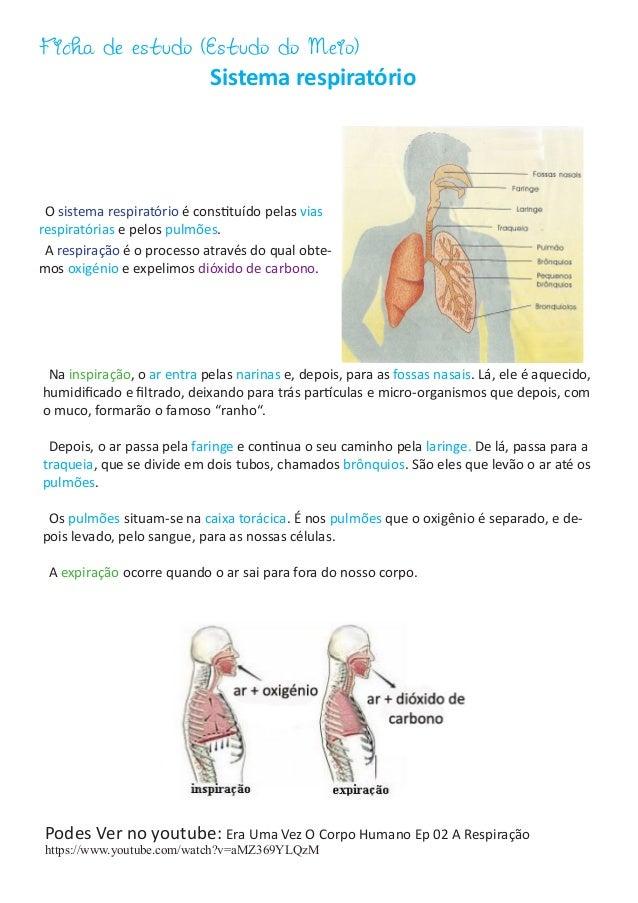 Ficha de estudo (Estudo do Meio) Sistema respiratório O sistema respiratório é constituído pelas vias respiratórias e pelo...