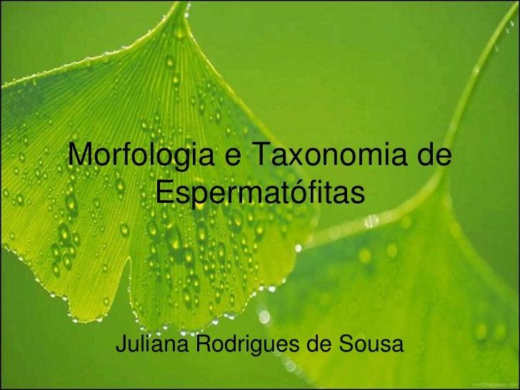 Morfologia e Taxonomia de      Espermatófitas   Juliana Rodrigues de Sousa