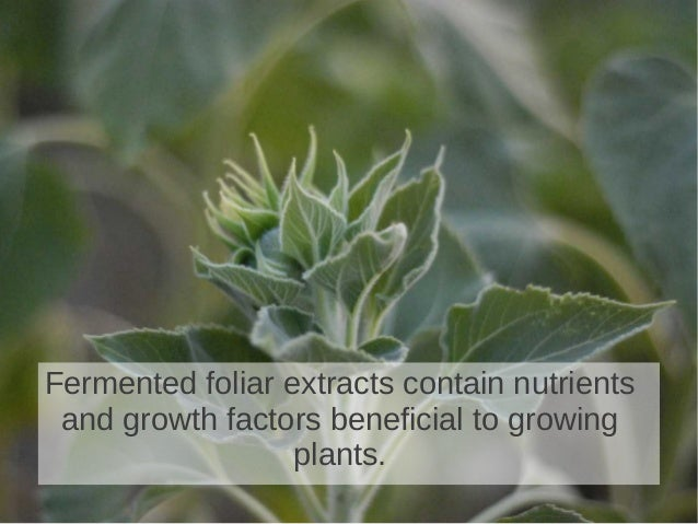 Fermented foliar extracts contain nutrientsand growth factors beneficial to growingplants.
