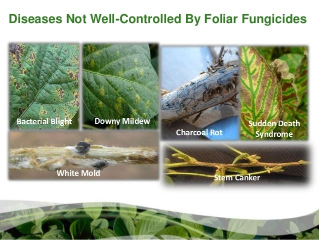 foliar fungicide  u0026 insecticide use in soybeans