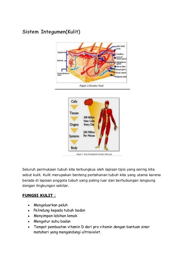 Folio sains sukan by leha Slide 2