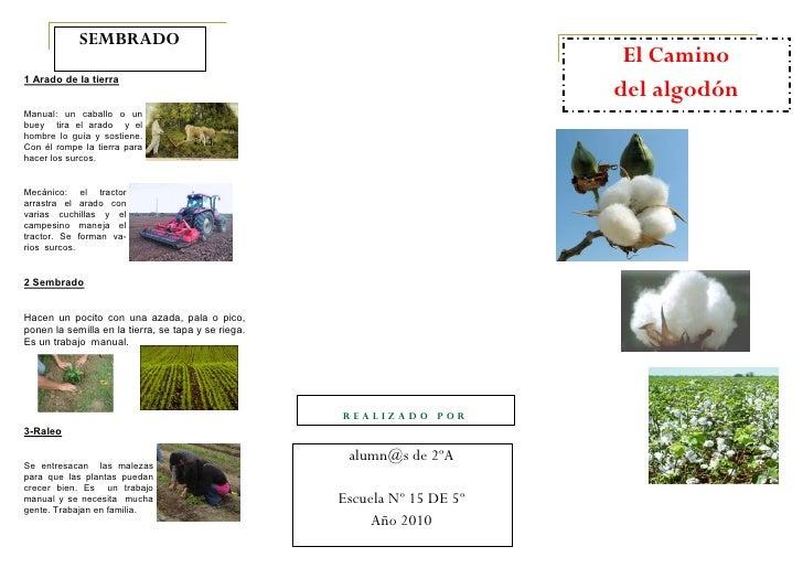 Circuito Productivo Del Algodon : Folleto algodón