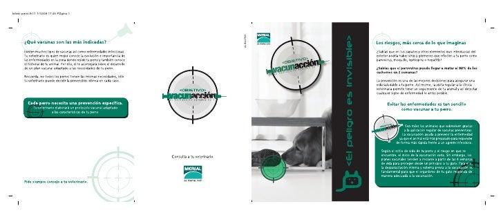 folleto perro.fh11 1/12/08 17:45 P gina 1