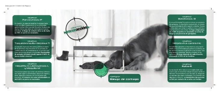 folleto perro.fh11 1/12/08 17:45 P gina 2