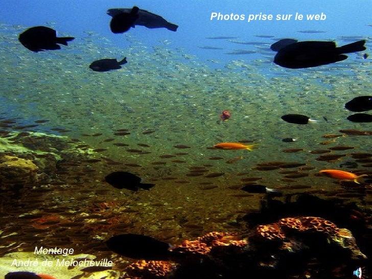 Photos prise sur le web Montage André de Melocheville