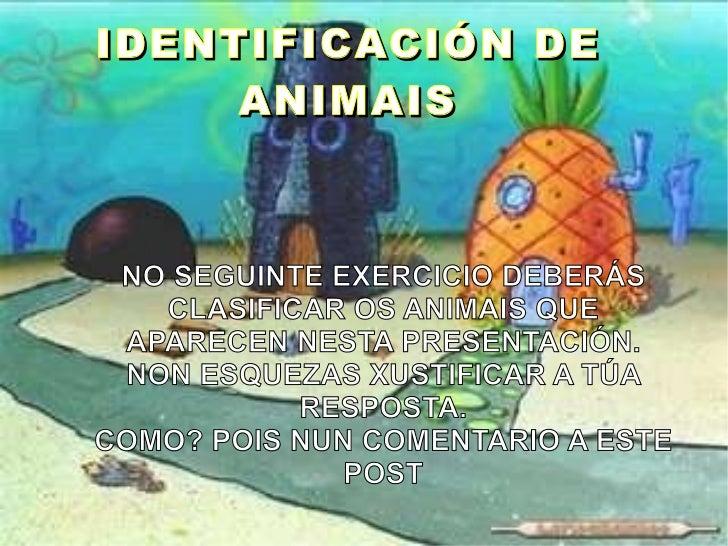 IDENTIFICACIÓN DE ANIMAIS NO SEGUINTE EXERCICIO DEBERÁS CLASIFICAR OS ANIMAIS QUE APARECEN NESTA PRESENTACIÓN. NON ESQUEZA...