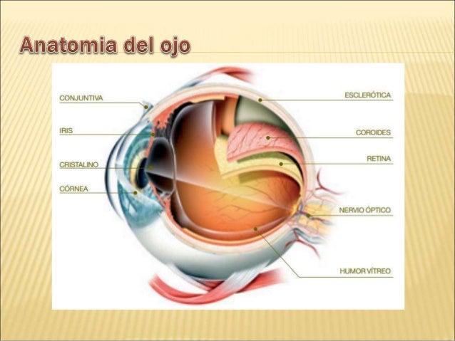 Anatomía del ojo para entender la importancia del cuidado de los ojos.