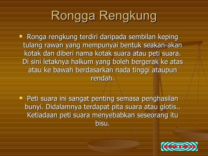 Rongga RengkungRonga rengkung terdiri daripada sembilan kepingtulang rawan yang mempunyai bentuk seakan-akankotak dan dib...
