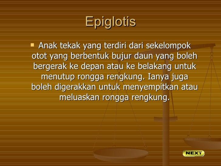 Epiglotis Anak tekak yang terdiri dari sekelompokotot yang berbentuk bujur daun yang bolehbergerak ke depan atau ke belak...