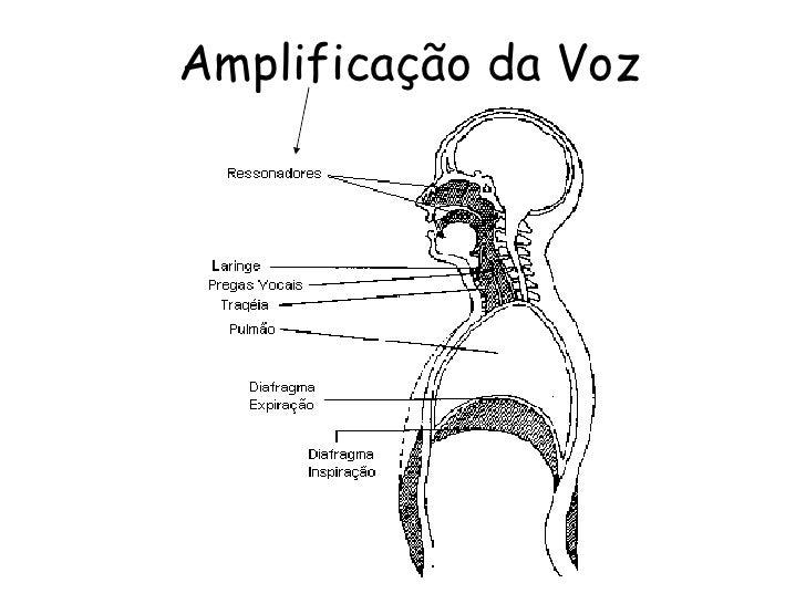 Amplificação da Voz