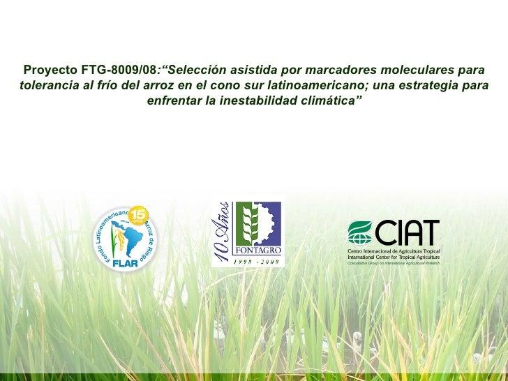 """Proyecto FTG-8009/08 :""""Selección asistida por marcadores moleculares para tolerancia al frío del arroz en el cono sur lati..."""