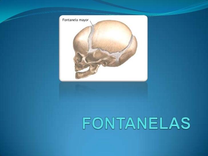  Fontanela Anterior o Bregmática. Suturas interfrontal, interparietal y 2 porciones de la frontoparietal. Fontanela poste...