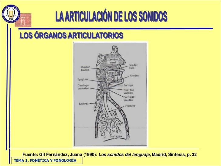 Fuente: Gil Fernández, Juana (1990): Los sonidos del lenguaje, Madrid, Síntesis, p. 32 TEMA 1. FONÉTICA Y FONOLOGÍA