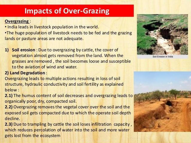 overgrazing problems