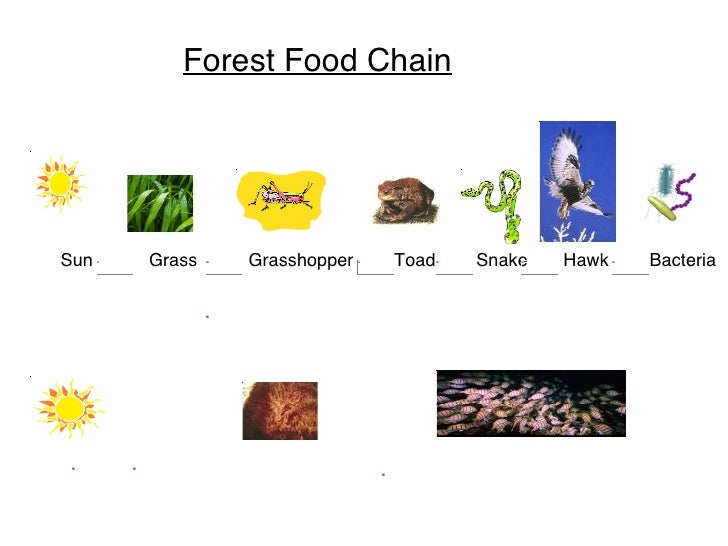 Food Chain Starting With Sun