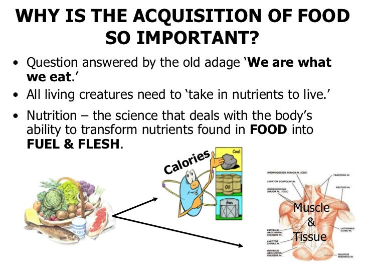 "nutrition food in popular culture Previous: 1 session 1: food literacy and the role of communications relating  to  he suggested that what he described as ""pop culture nutrition noise"" has."