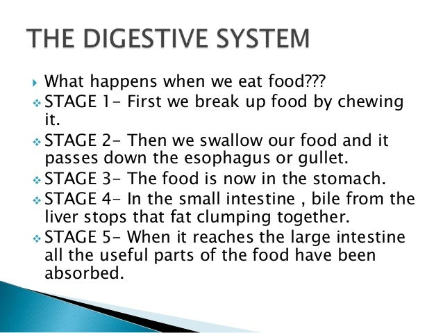 What Happens To Food When We Eat