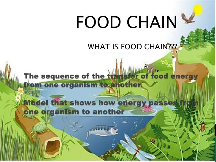 FOOD CHAIN<br />WHAT IS FOOD CHAIN???<br />The sequence of the transfer of food energy from one organism to another.Model ...