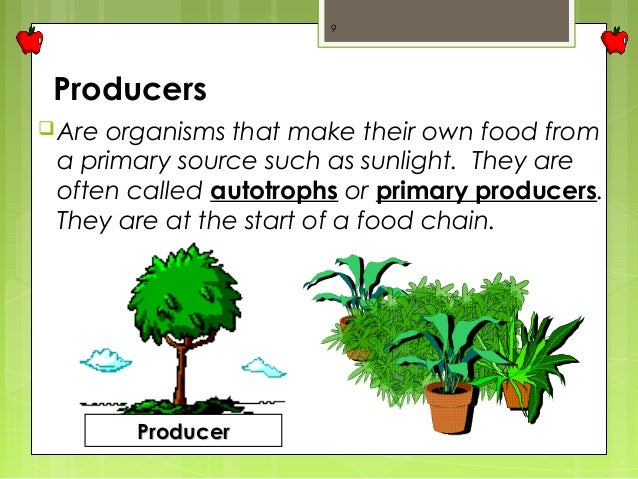 Which Organisms Is A Food Producer Food Chain