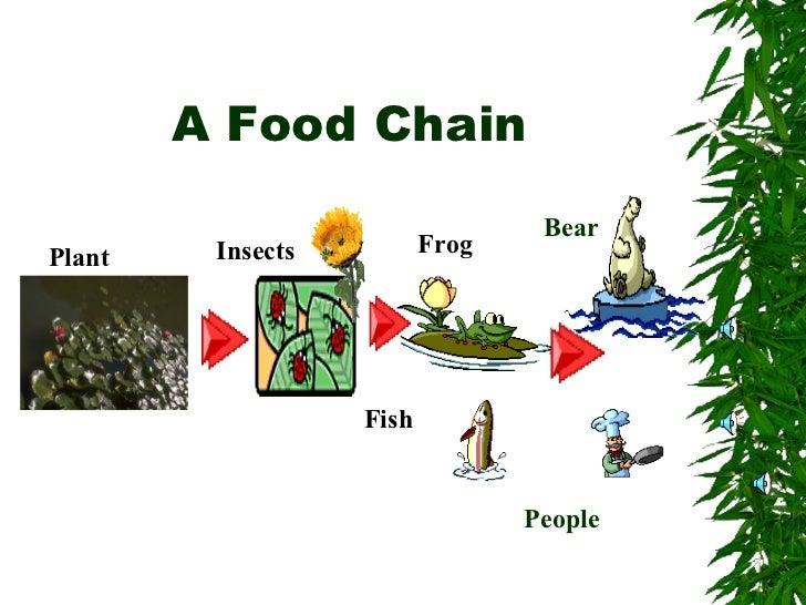 Food chain 1