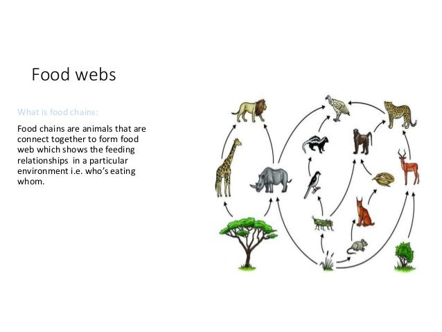 food chains food webs and the Food webs and food chains worksheet 1 look at this food chain lettuce greenfly ladybird thrush cat a what does the arrow mean in a.