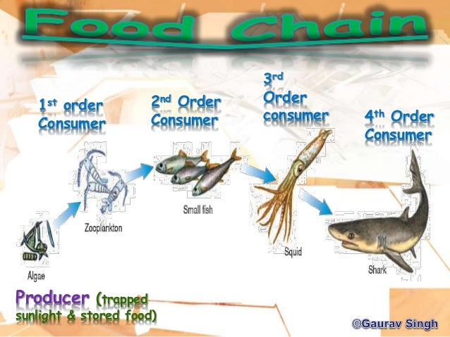 food chain and webs