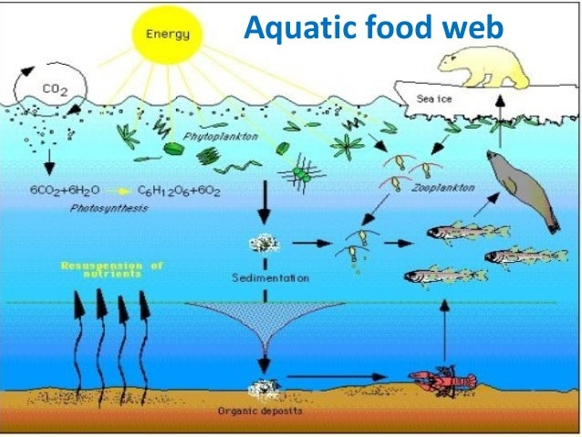 Foodchain foodweb and ...