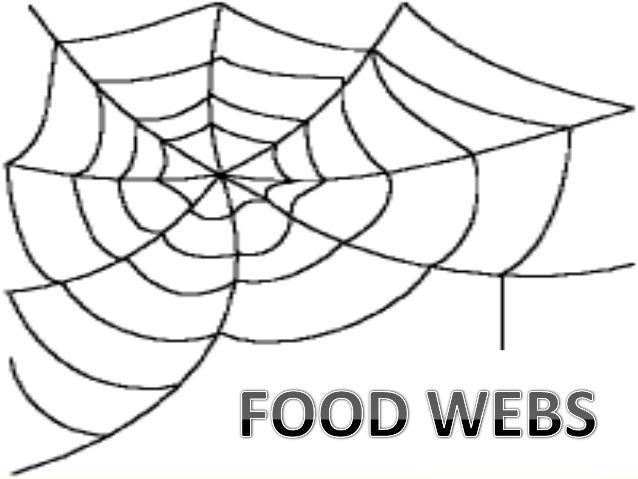 Food chain,food web and ecological pyramids