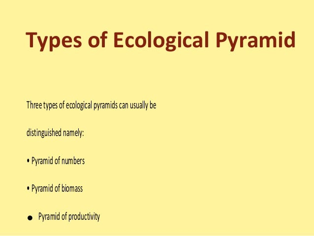 Food chainfood web and ecological pyramids – Ecological Pyramids Worksheet